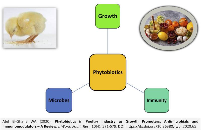 10-Phytobiotics_in_Poultry_Industry--