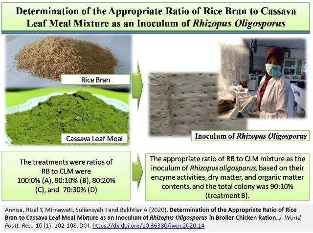 1163_0-Rice_Bran__Cassava_Leaf_Mixture_as_Inoculum_of_Rhizopus_Oligosporus