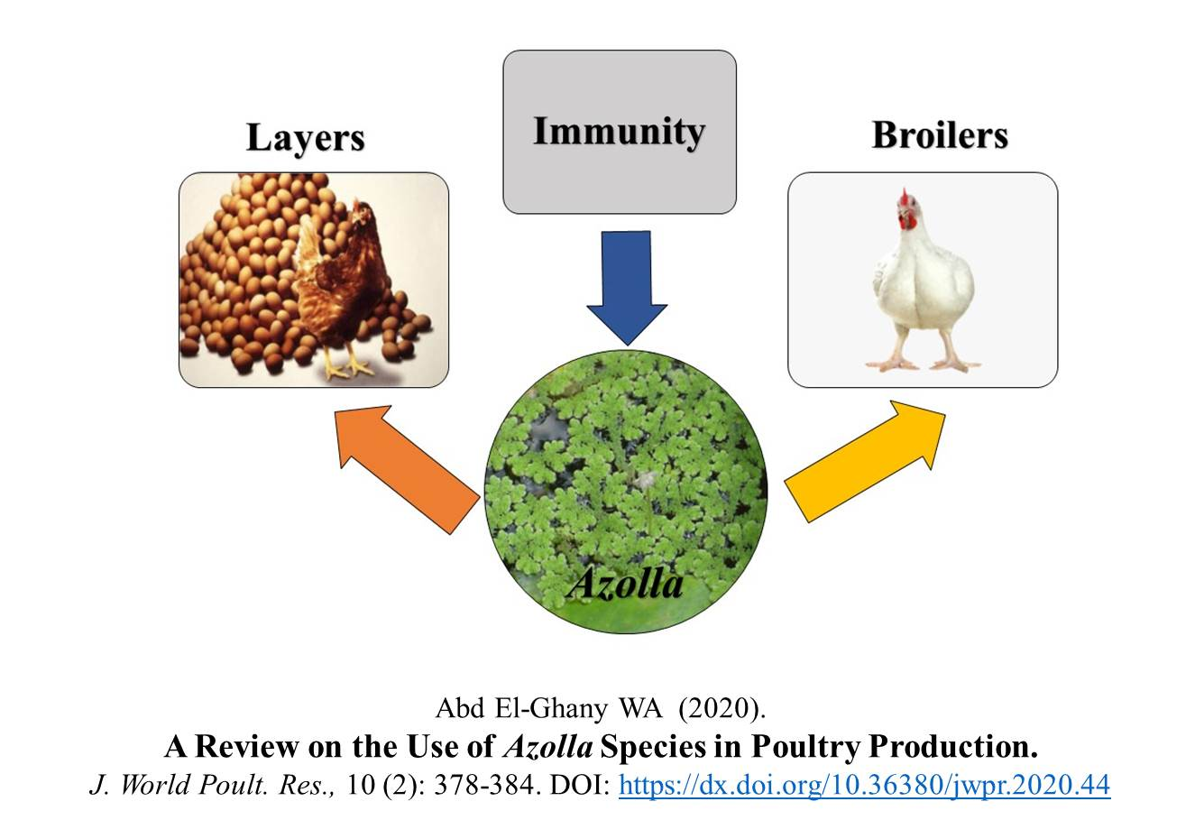 1211-Azolla_Species_in_Poultry_Production