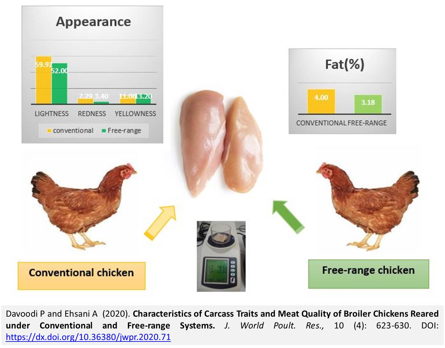1239-Broilers_Reared_under_Conventional__Free-range_Systems