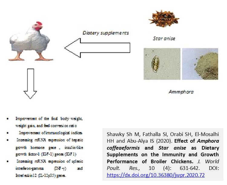 1250-Amphora_coffeaeformis_and_Star_anise_as_broiler_diet