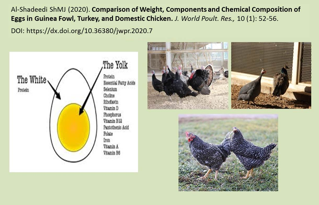 GA_JWPR_1172-Eggs_in_Guinea_Fowl_Turkey_and_Domestic_Chicken