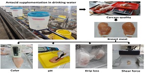1266_Drinking_Water_on_Yield__Meat_Quality_of_Broiler